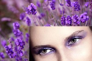 FIM Pretty Purple - Header _ Pic