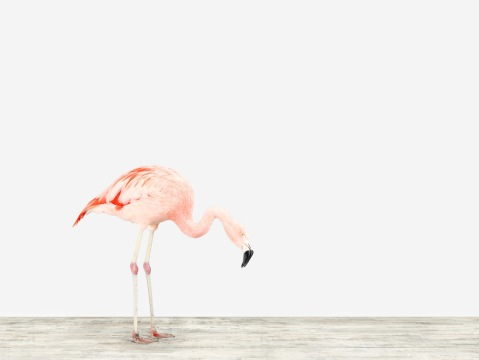 flamingo print by Sharon Montrose, 20x200