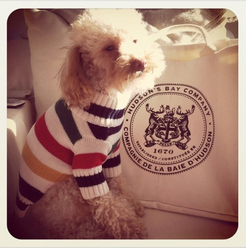 a dog and his stripes, via B-Insider